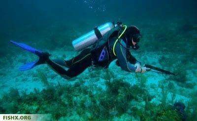 Смертельная опасность подводной охоты?