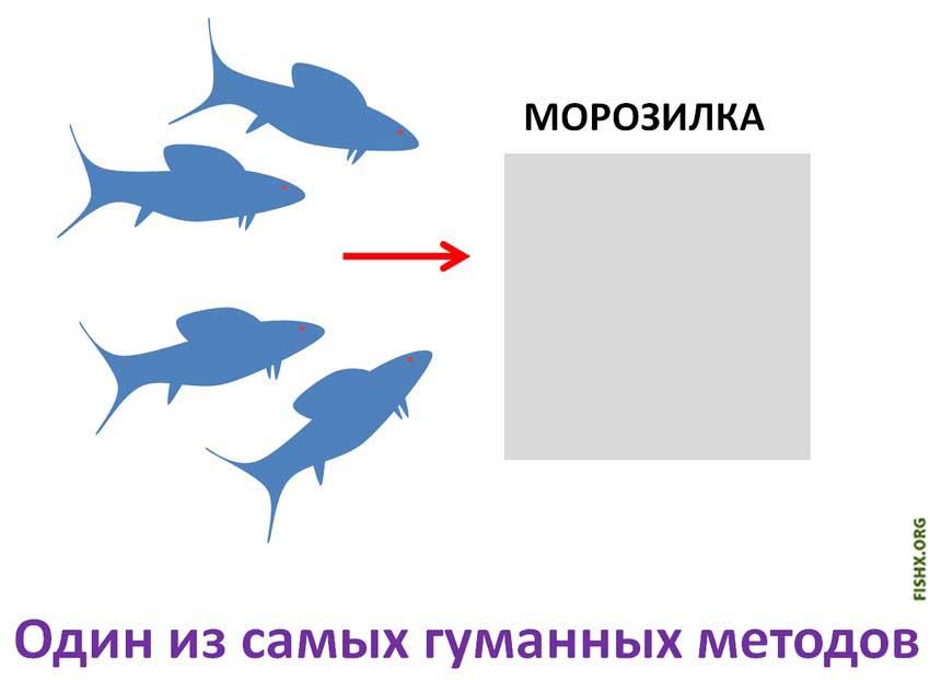 усыпить рыбу