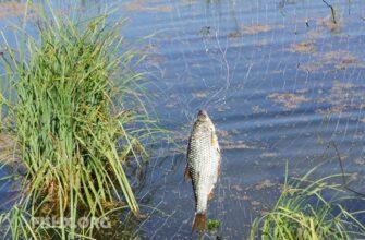 У каждой рыболовной сети должен стоять инспектор с линейкой?