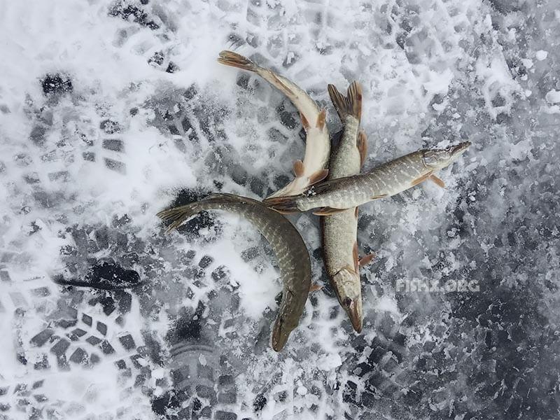Рыбалка на щуку с зимними приманками