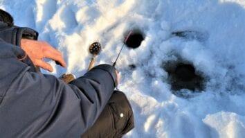 Ходовые и универсальные наживки для зимней рыбалки
