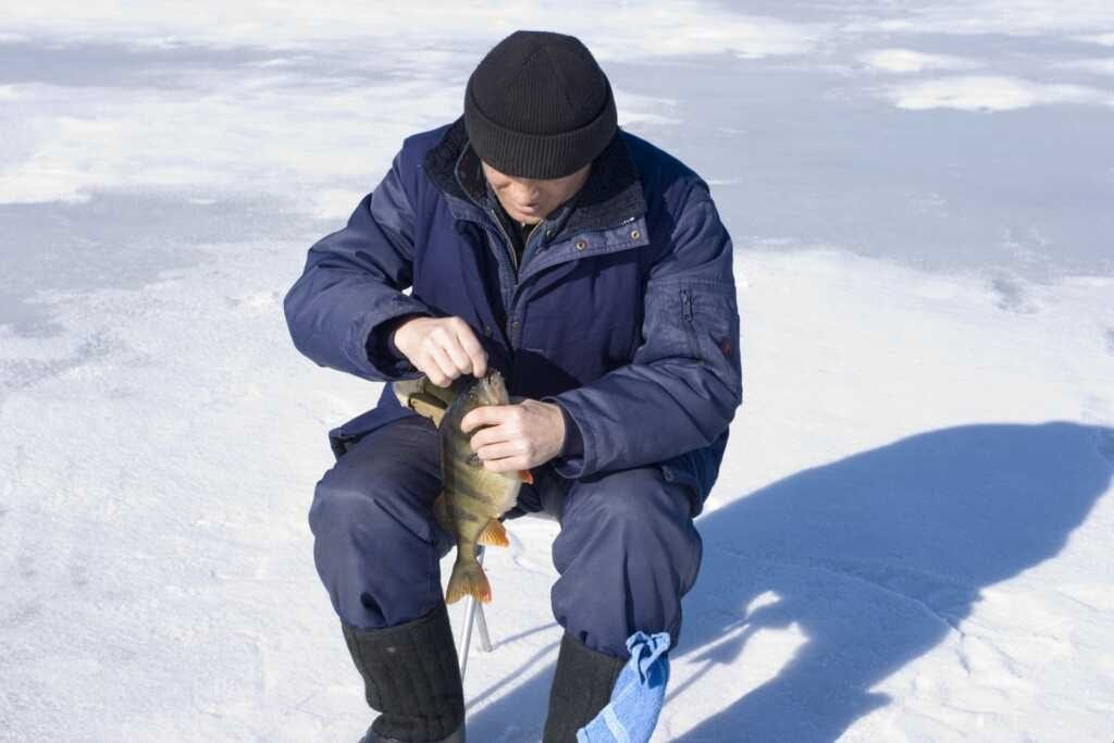 Тонкости ловли окуня зимой