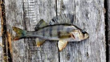 Учимся понимать повадки хищной рыбы