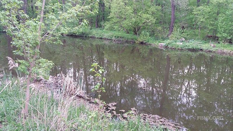 Со спиннингом вдоль лесной речки-переплюйки