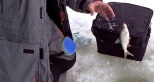 Плотва со льда