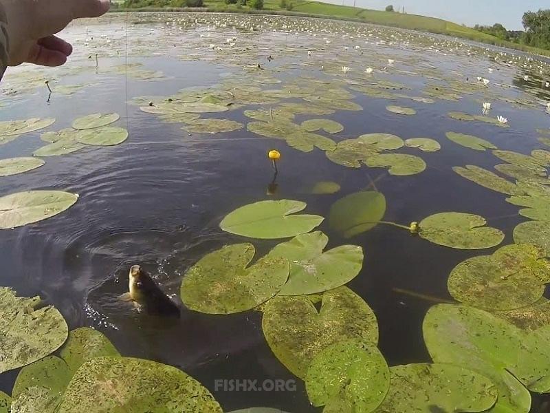 Рыбалка на мормышку летом