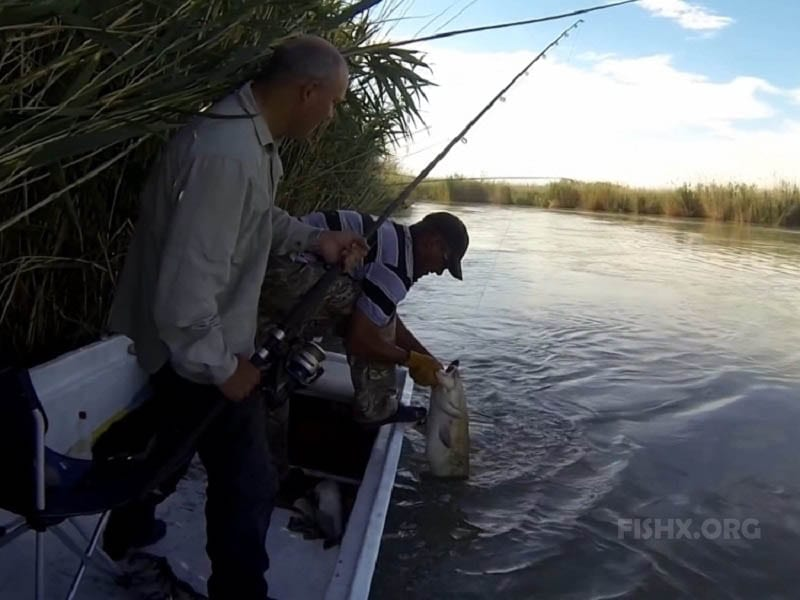 Ловля сома на реках