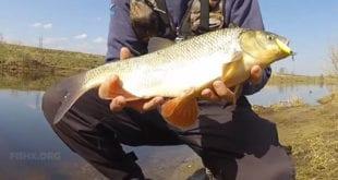 Рыбалка весной на воблеры
