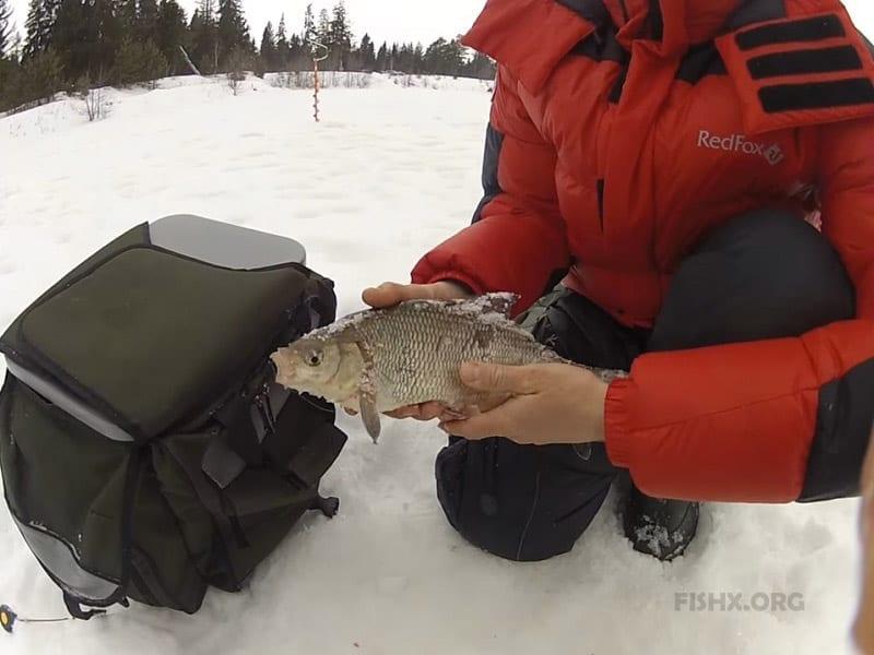 Ловля язя зимой