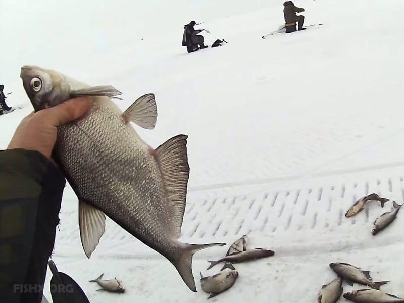 Ловля синца со льда