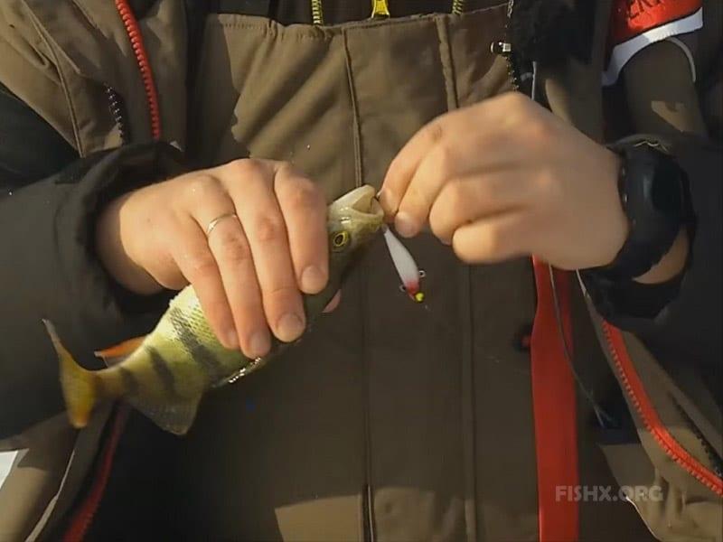 Окунь балансир Maiko фирмы Lucky Jonn размером 49 мм