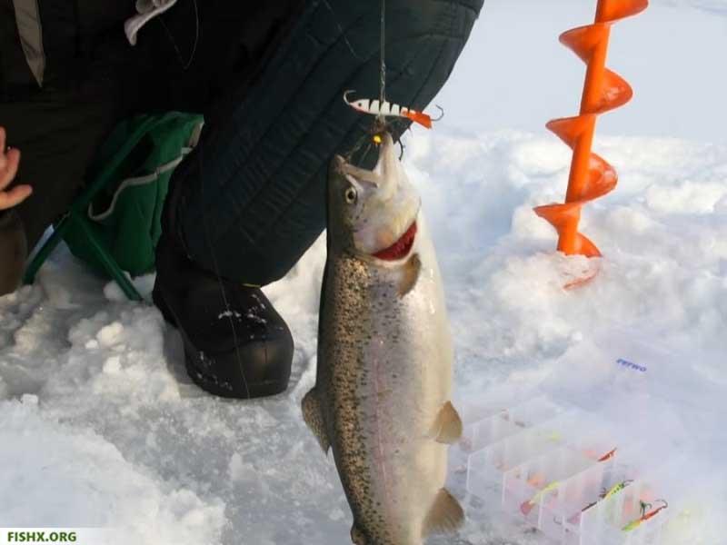 Ловля форели зимой на балансиры