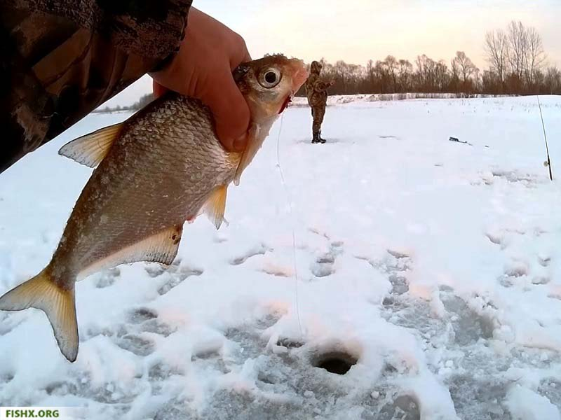 Ловля на донку зимой