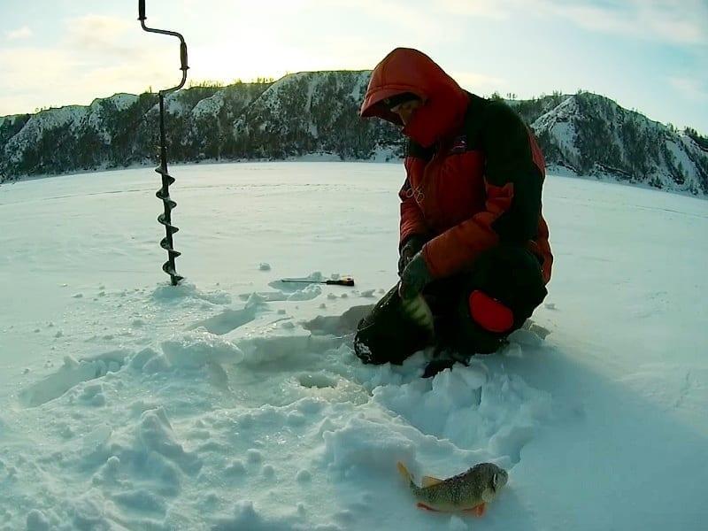 Тактика приманивания окуня зимой