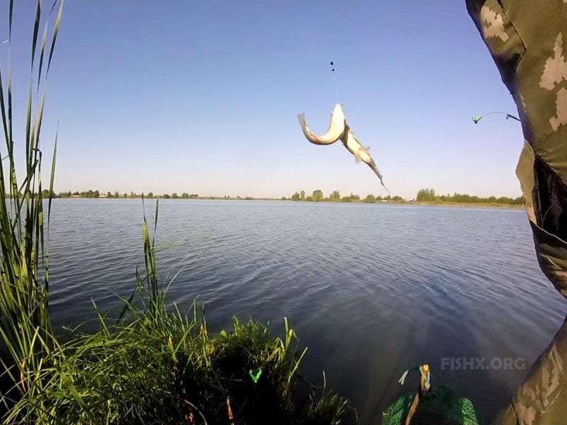 Жадный клёв карася на пруду