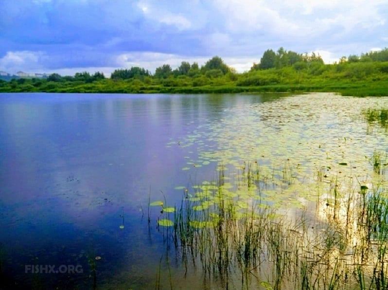 Устьевая часть реки Везломы