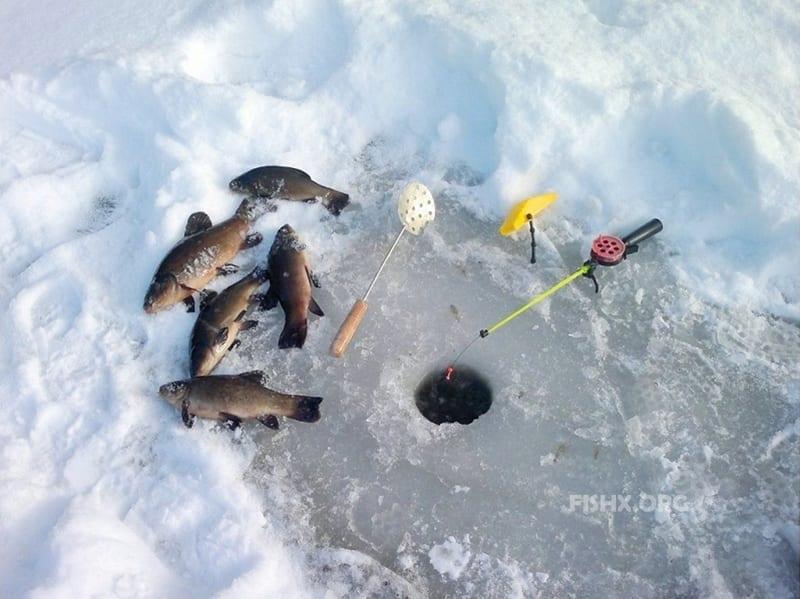 Зимняя ловля линя