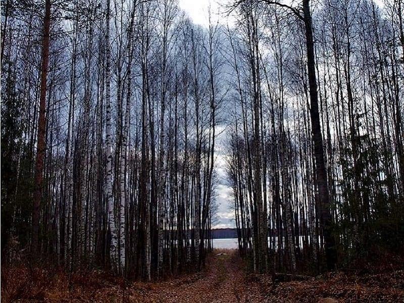 Дорога к Сорочьему озеру