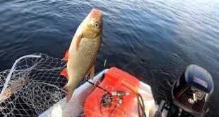 Как Пашка заболел рыбалкой