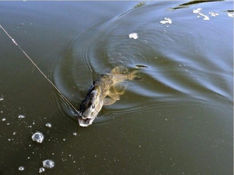 Рыбалка в устье Рутки