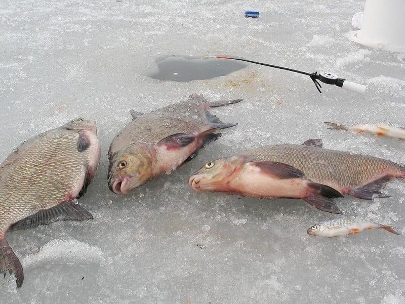 Рыбалка на зимнюю донку