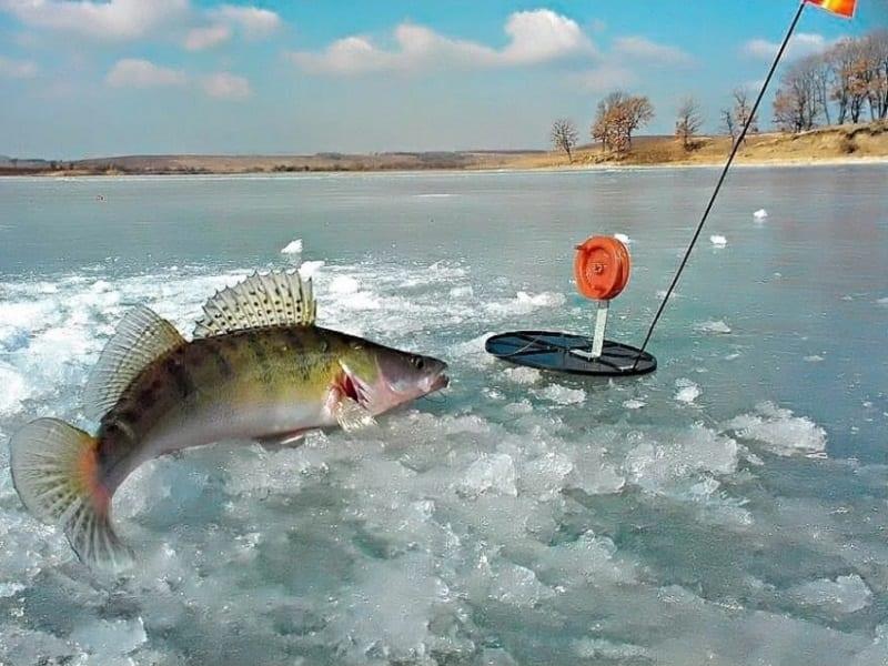 Зимняя рыбалка на живца