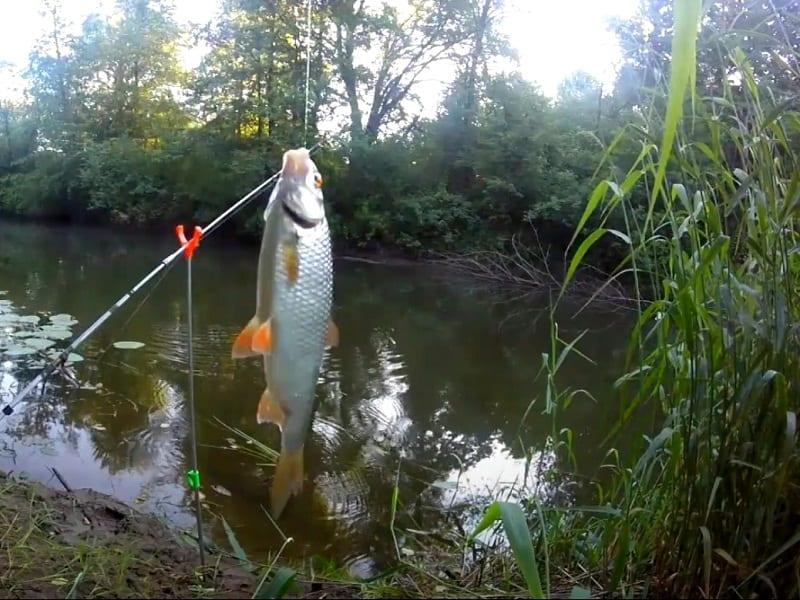 За всю жизнь первая рыбалка без комаров