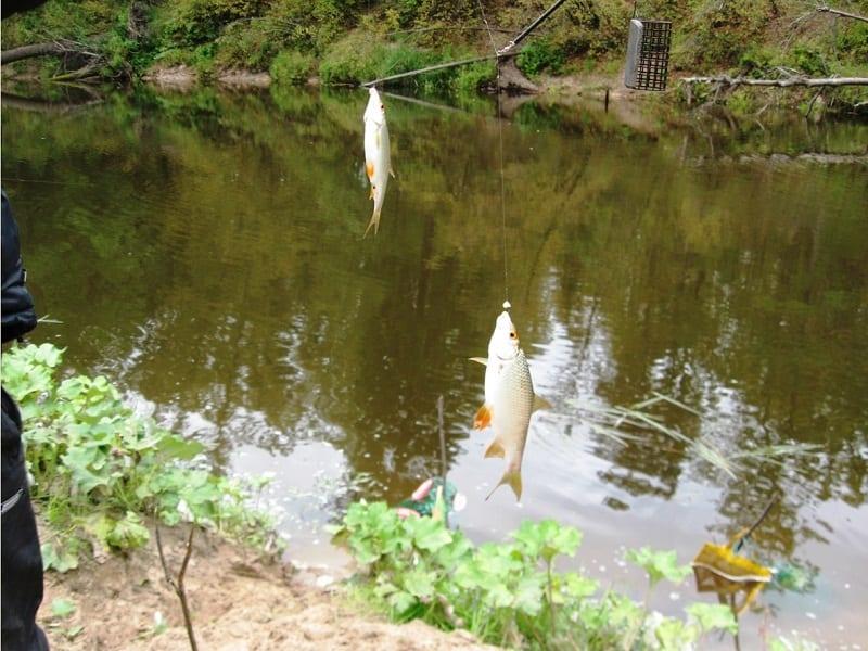 Осенняя рыбалка на Большой Кокшаге в Старожильске