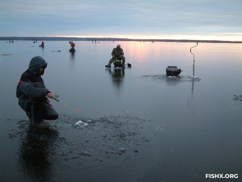 За судаком по первому льду