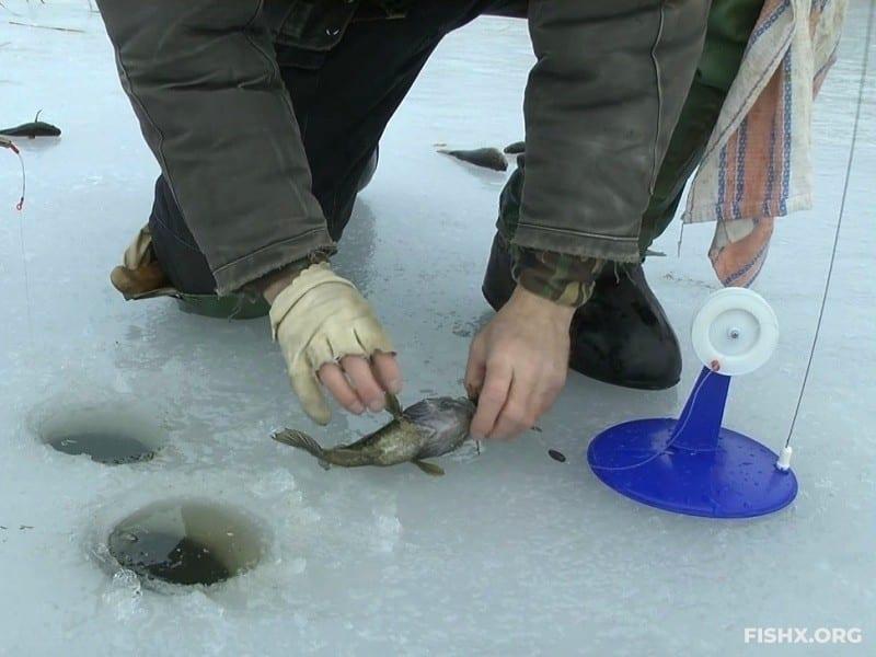 Ловля ротана со льда на жерлицы