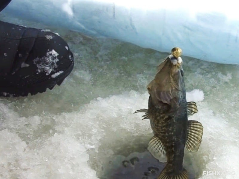 Ловля ротана зимой на удочку
