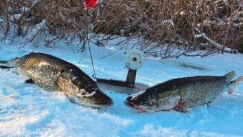 Ловим щуку зимой на жерлицы