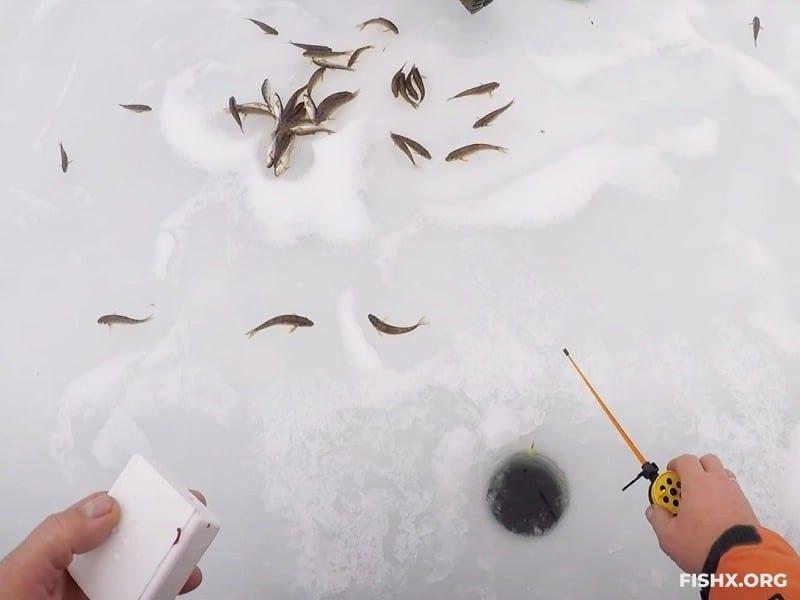 Пескарь со льда