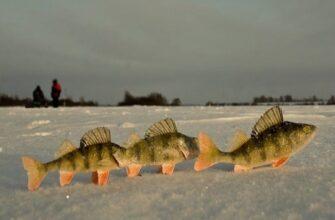 Случаи на рыбалке после Нового года