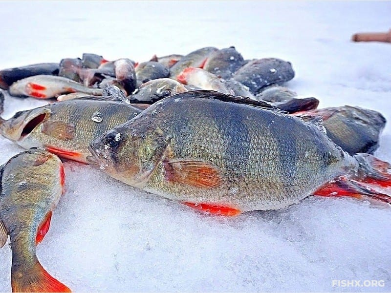 Простые рыбацкие истории