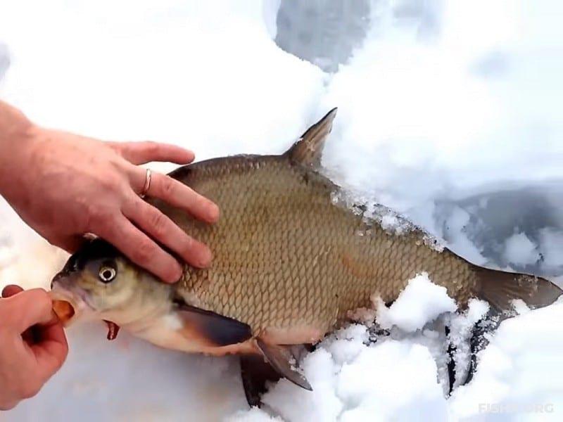 Ловля леща со льда