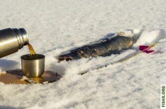 Как ловить щуку на живца зимой