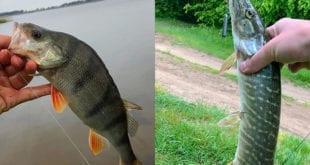 """День одного """"рыбного"""" места"""