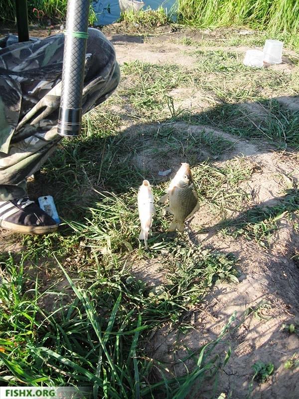Отчёт о рыбалке, пруд Салобеляк