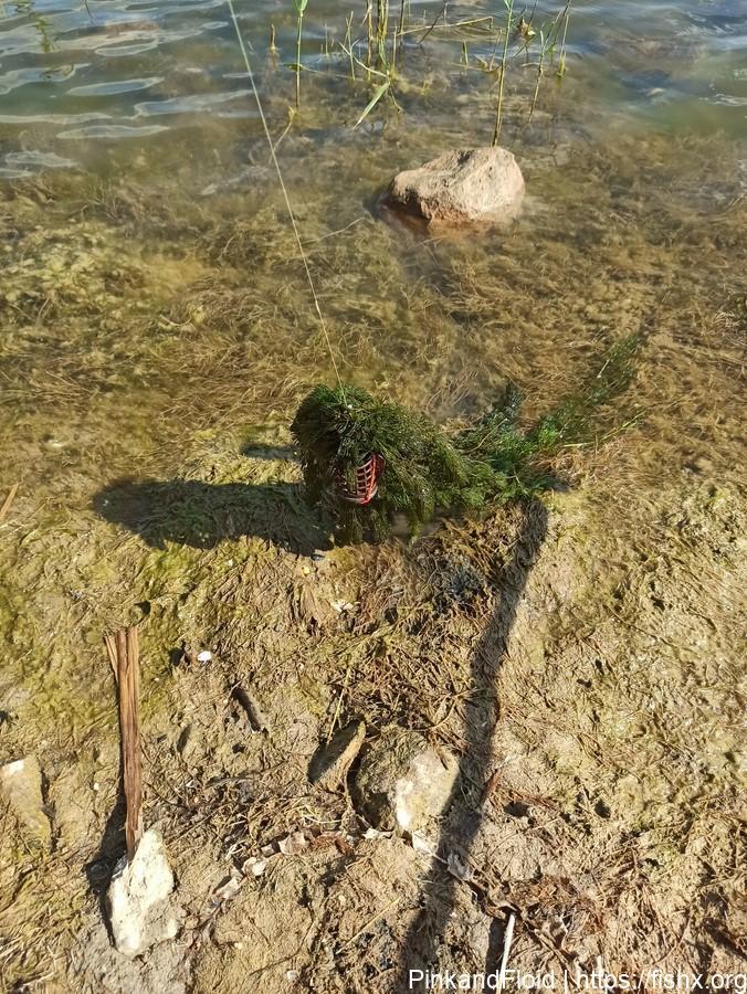 Разнорыбица на разливах