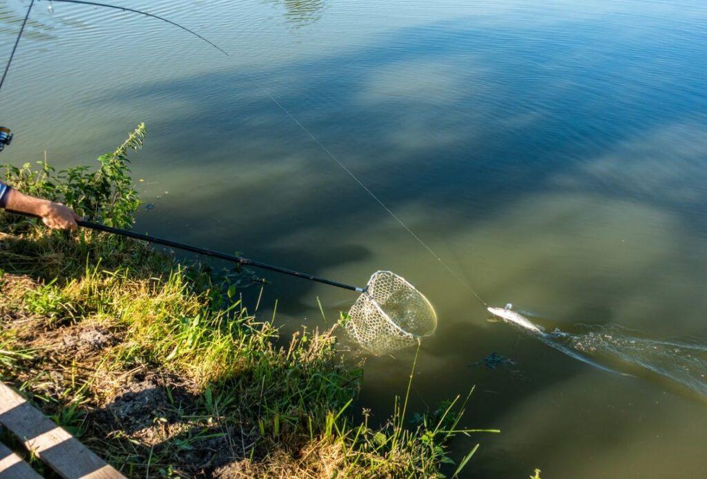 Влияние температуры на жизнедеятельность рыб
