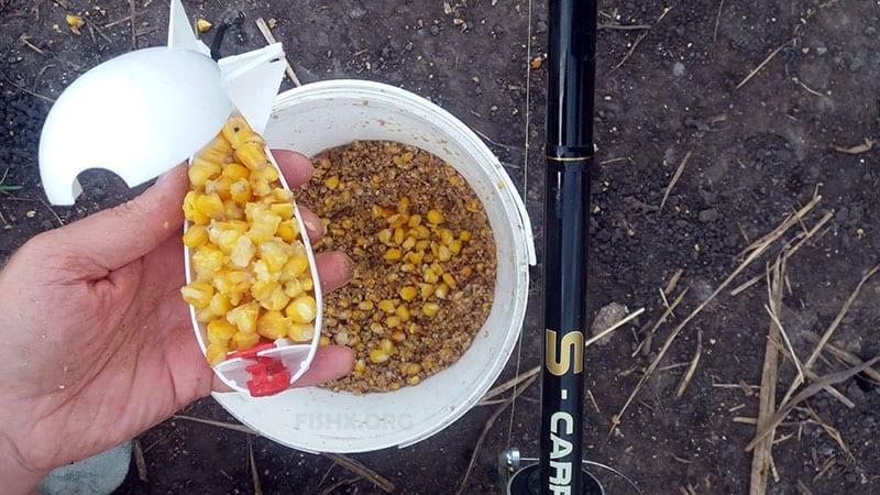 Ферментированную кукурузу можно использовать