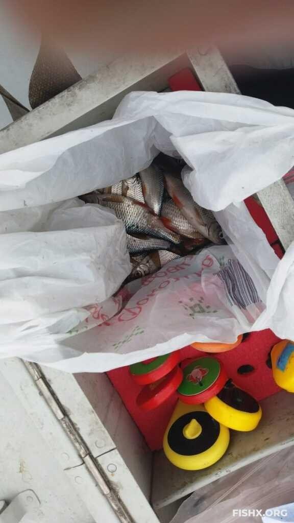 На льду в плюс пять. Отчет о рыбалке