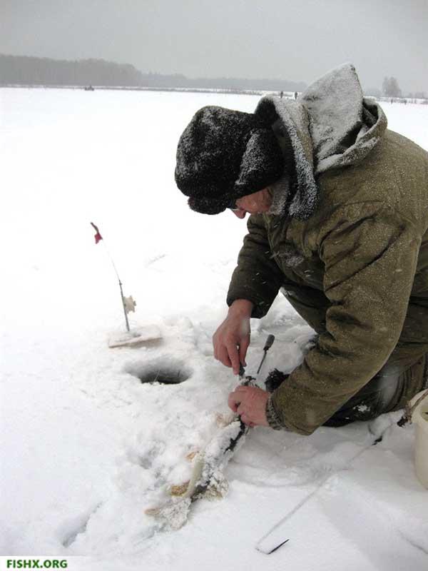 Первая щука на зимней рыбалке. Сезон открыт!