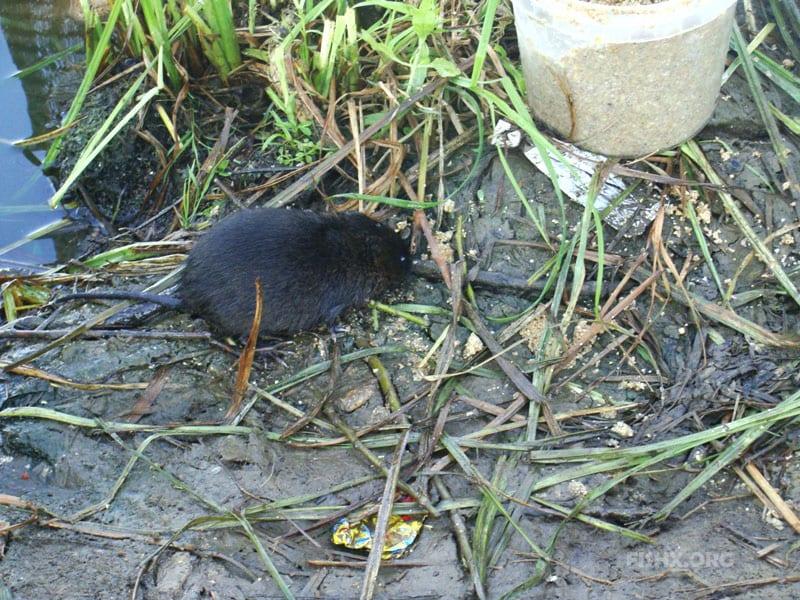 Случаи на рыбалке «Звери напали на нашу стоянку»