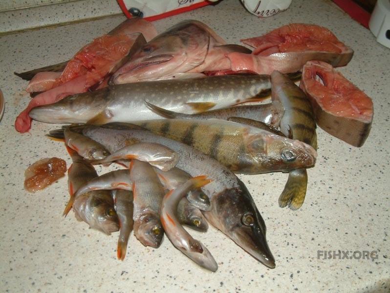Рыба для заливного