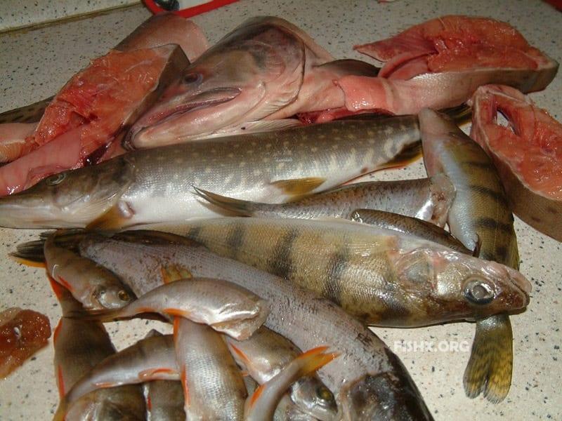 Рыбалка накануне Нового года