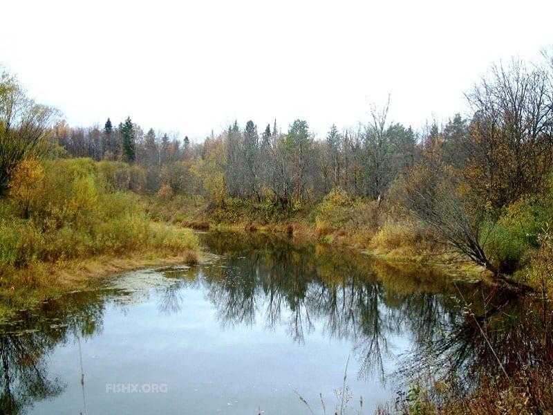 Осенний фидер