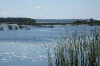 На рукотворном море-болоте