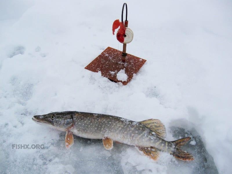 Отчёт о ловле в первый снег